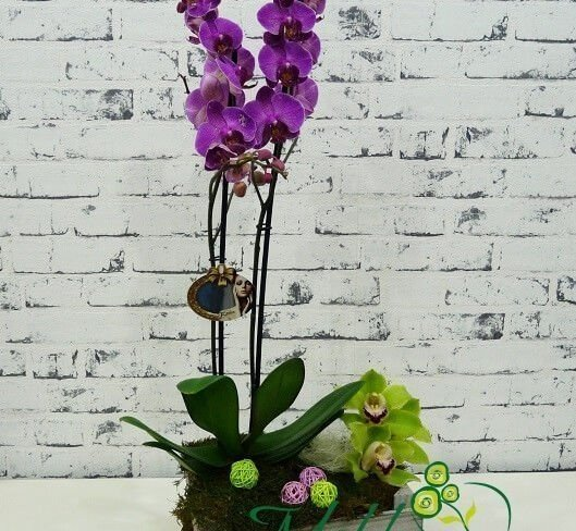 Compozitie Cu Orhidee De Camera In Chisinau Moldova La Pret Bun Cu